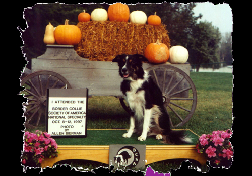 The First Border Collie National